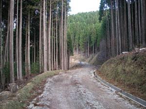 森林管理道 椎葉線