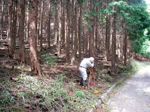 本数調整伐採分の周測状況
