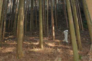 林況調査(樹高計測)